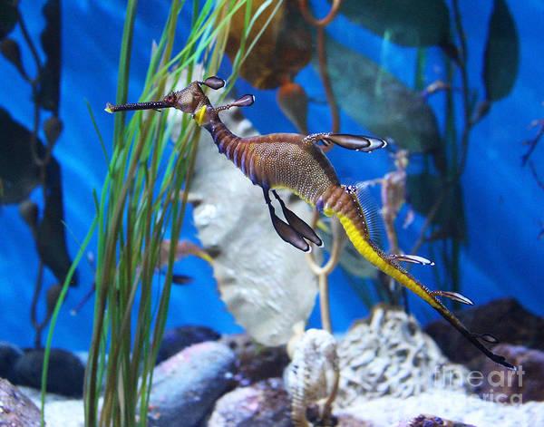 Seadragon Photograph - Seadragon by Cheryl Del Toro