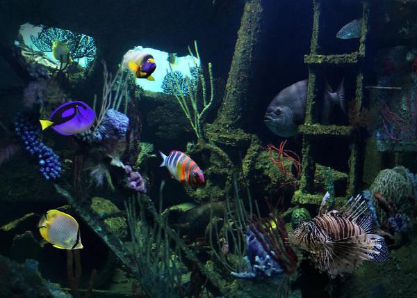National Aquarium Photograph - Seafood Sampler by Lori Deiter
