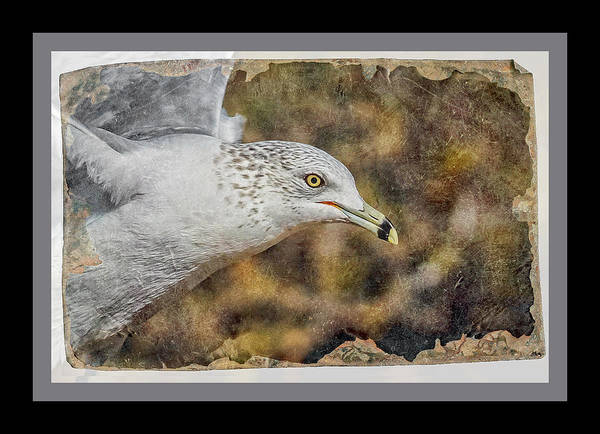 Shore Bird Digital Art - Seagull 4 by Ernie Echols