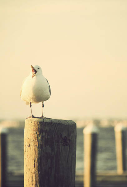 Photograph - Seagull At The Shore Seaside New Jersey by Terry DeLuco