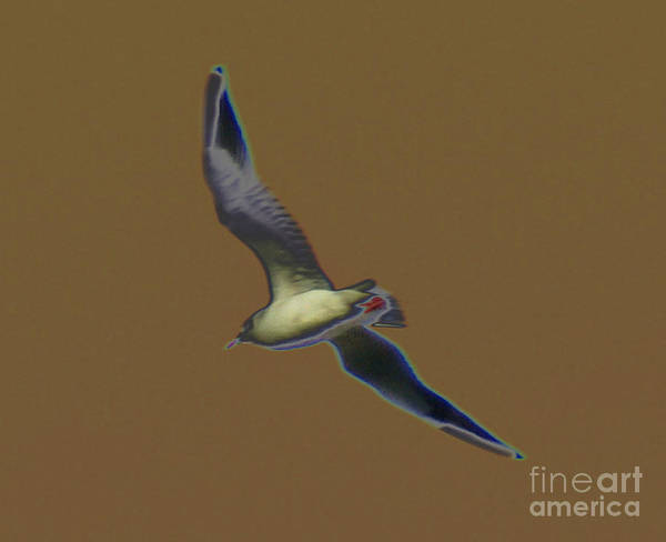 Bird In Flight Digital Art - Seagull by Carol Lynch