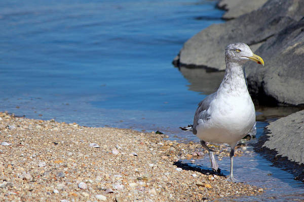 Photograph - Seagull Crab Meadow Beach by Susan Jensen