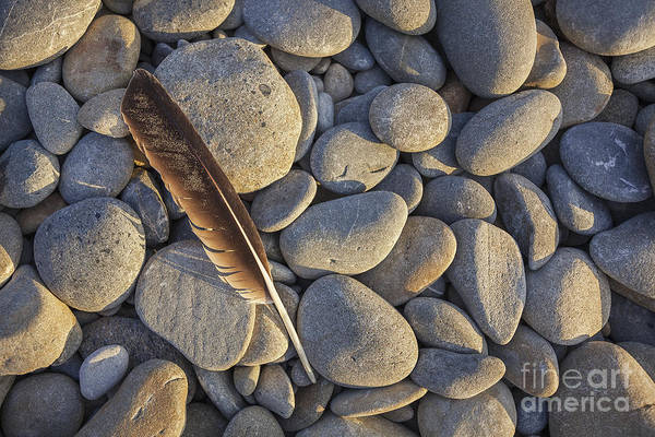 Photograph - Seagull Feather On Ruby Beach by Bryan Mullennix
