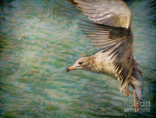 Photograph - Seagull Flutter by Deborah Benoit