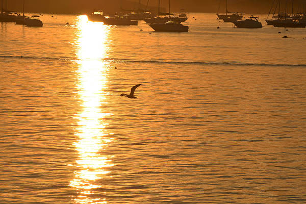 Photograph - Seagull Flying Into The Sunset by Toby McGuire