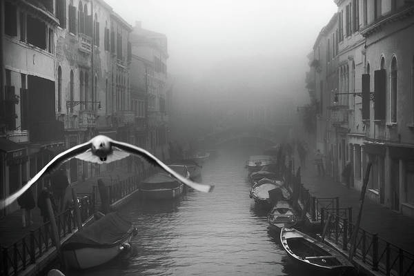 Foggy Wall Art - Photograph - Seagull From The Mist by Stefano Avolio