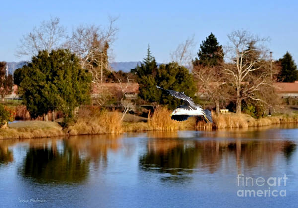 Photograph - Seagull Gliding Over Lake by Susan Wiedmann