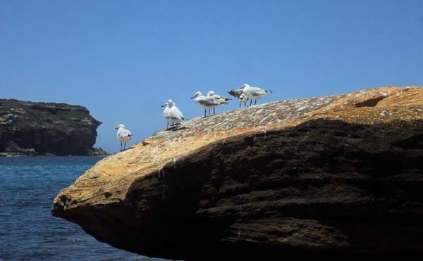Wall Art - Photograph - Seagull Hangout by Peter Mooyman
