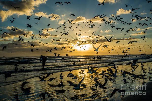 Seagull Migration Art Print by Mina Isaac