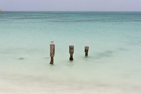 Shirleys Bay Photograph - Seagull In Antigua by Pier Giorgio Mariani