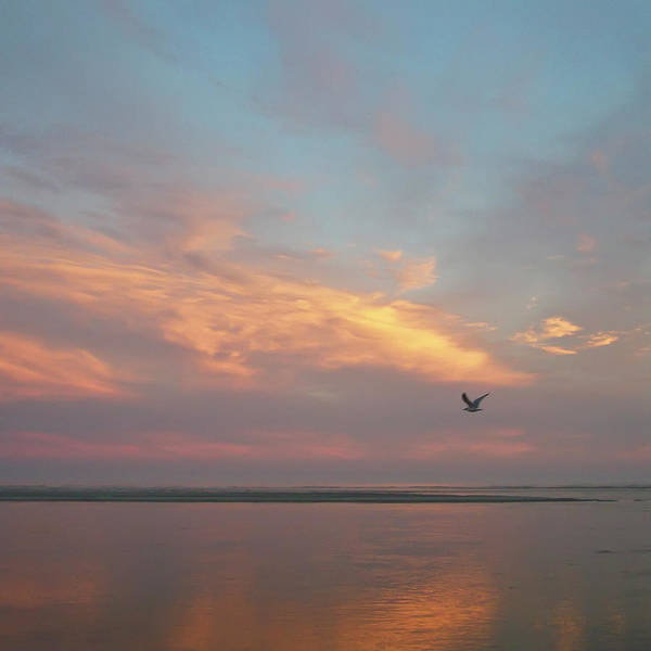 Tybee Island Photograph - Seagull In Flight At Sunset by Joseph Shields