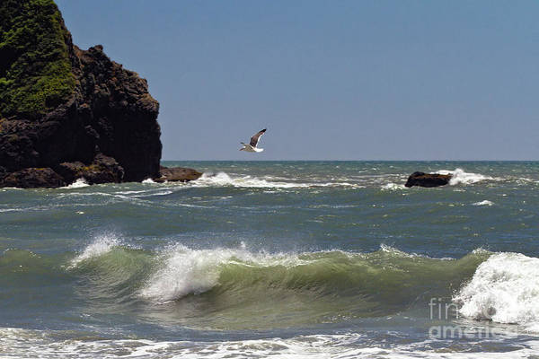 Photograph - Seagull In Flight by Stuart Gordon