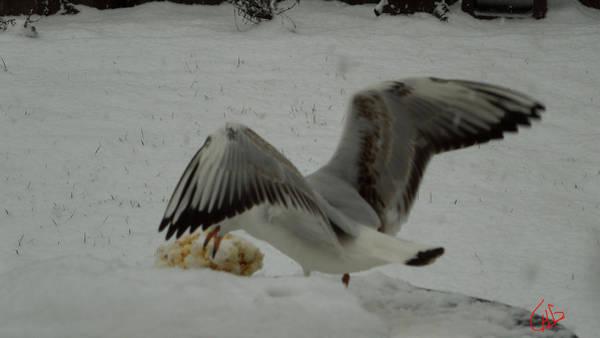 Photograph - Seagull Joy Wintergarden 02 Denmark 2013 by Colette V Hera  Guggenheim
