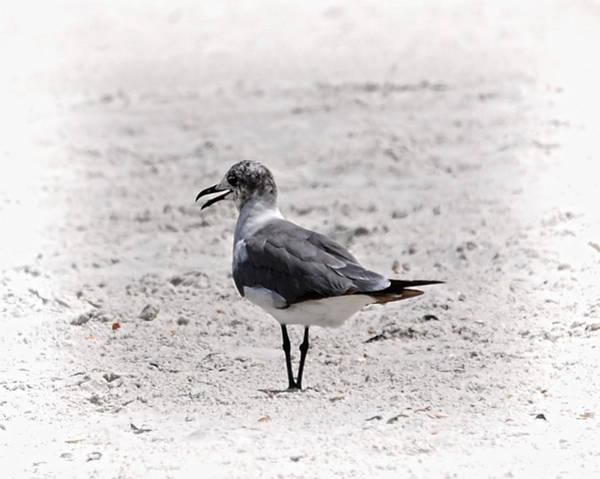 Photograph - Seagull by Judy Hall-Folde