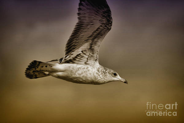 Photograph - Seagull Oil by Deborah Benoit