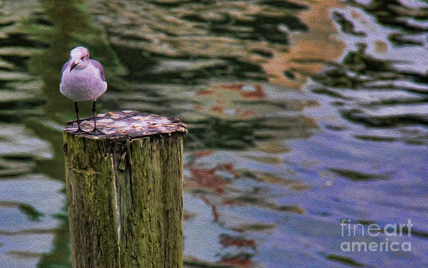 Wall Art - Photograph - Seagull On A Dock by Lee Dos Santos