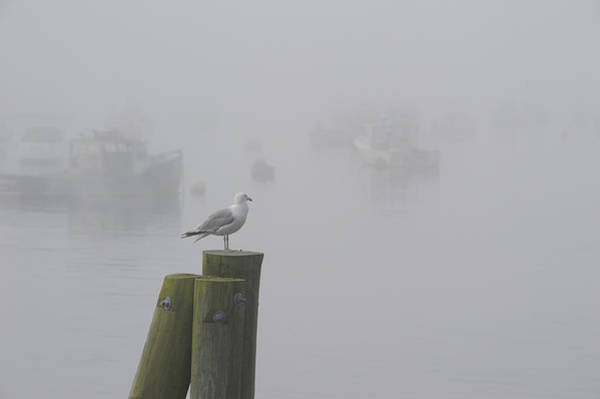 Photograph - Seagull On A Foggy Morning by Mary Lee Dereske