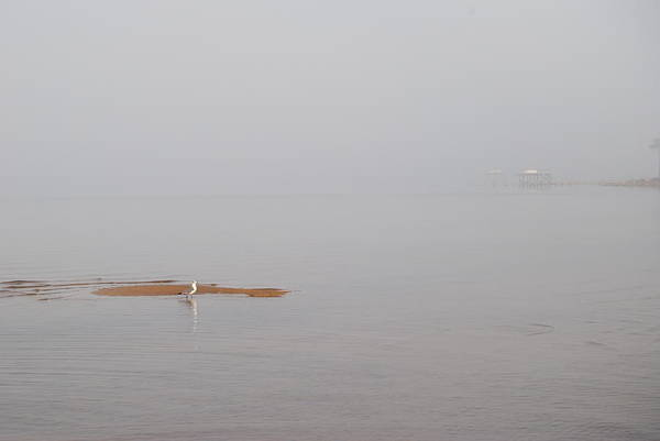 Choctawhatchee Bay Photograph - Seagull On A Sandbar by Charlie Day