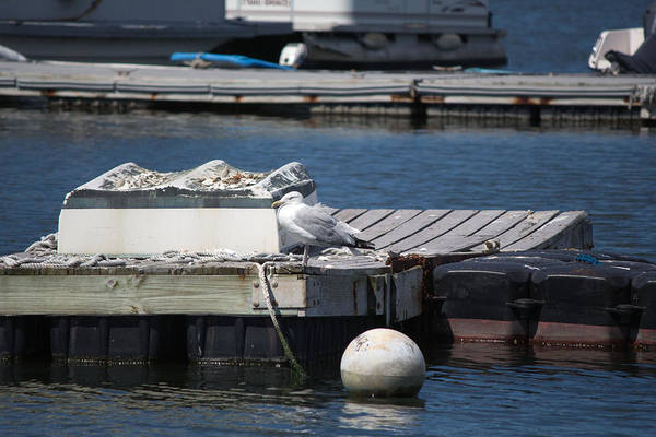 Photograph - Seagull On Dock In Centerport by Susan Jensen