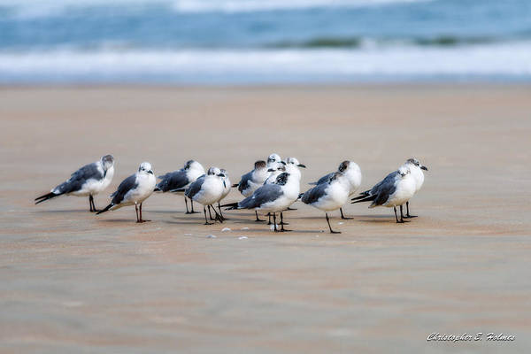 Photograph - Seagull Parking by Christopher Holmes