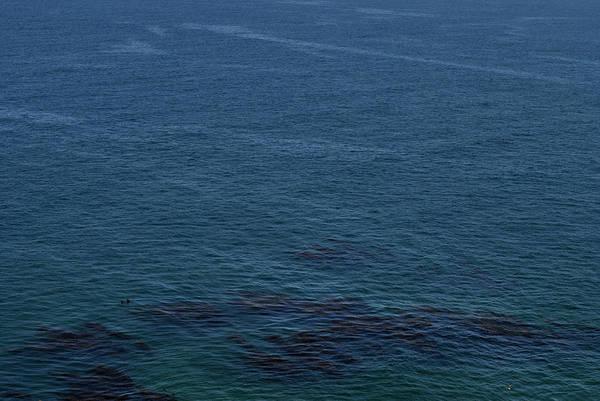 Photograph - Seagull by Randal Bruck