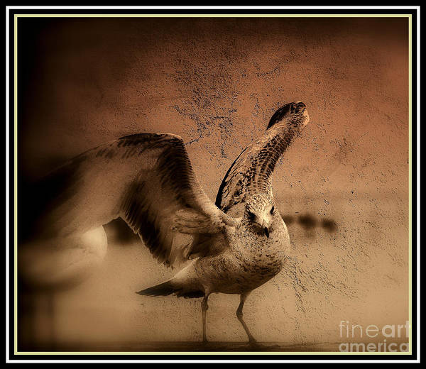 Photograph - Seagull Ready To Fly by Susanne Van Hulst