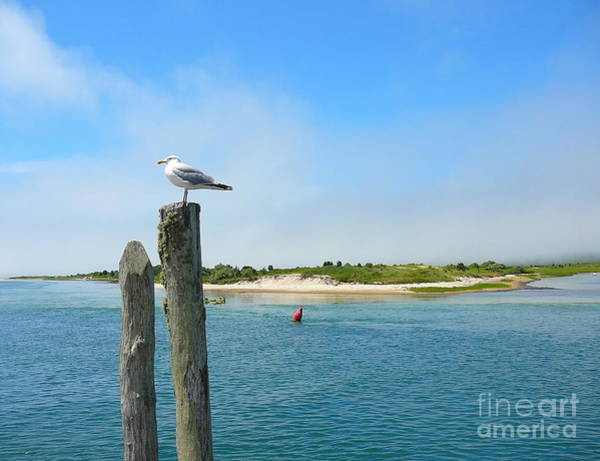 Squid Row Photograph - Seagull Relaxing In Menemsha by Matt Dana