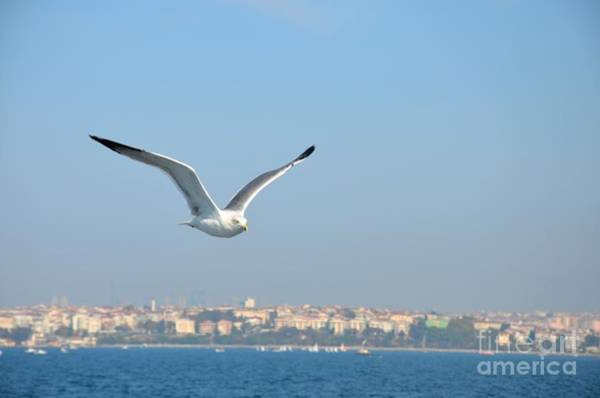 Photograph - Seagull Soars In Breeze by Imran Ahmed