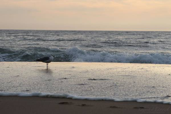 Photograph - Seagull Standing Watch At Sunrise by Robert Banach