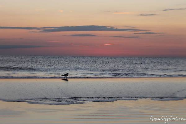 Photograph - Seagull Strolls The Seashore by Robert Banach