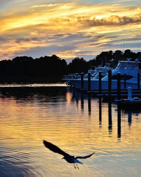 Photograph - Seagull Sunset At The Indian River Marina Delaware by Kim Bemis