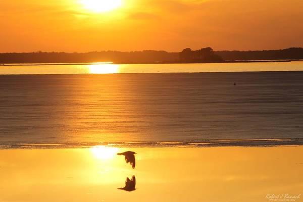 Photograph - Seagull Through Sunset by Robert Banach