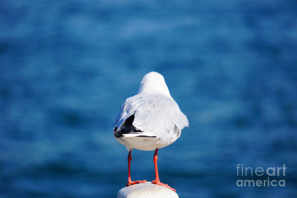 Photograph - Seagull With Red Feet Gazing At The Sea by Beverly Claire Kaiya