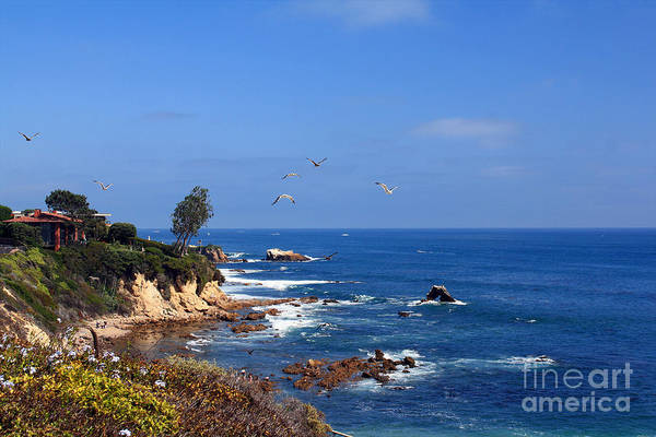 Photograph - Seagulls At Laguna Beach by Kelly Holm