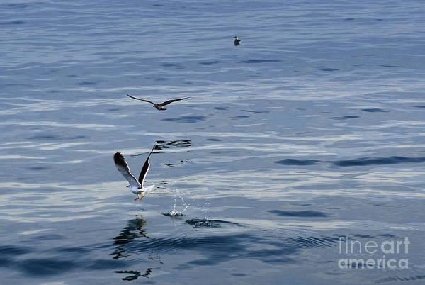Photograph - Seagulls At Malaga Sea - Port Of Malaga - Andaluzia - Spain by Carlos Alkmin