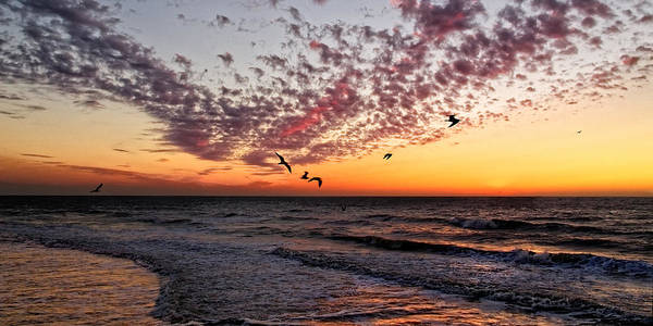 Photograph - Seagulls At Sunset by Lars Lentz