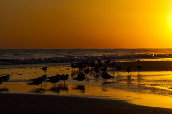 Photograph - Seagulls At Sunset by Rob Hemphill