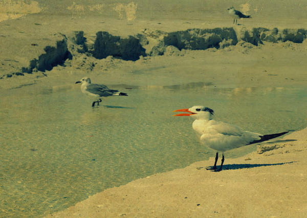 Photograph - Seagulls At The Beach II by Patricia Awapara