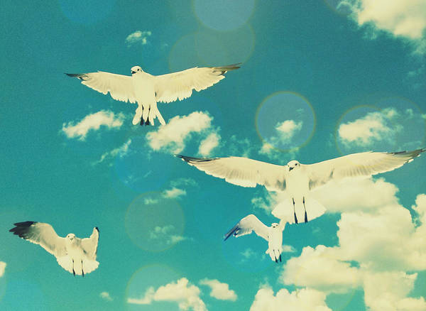 Photograph - Seagulls At The Beach by Patricia Awapara