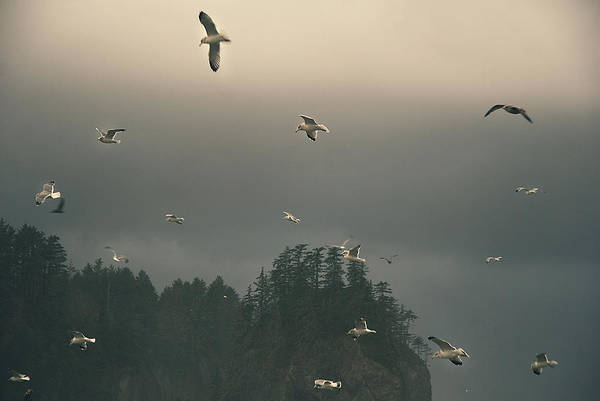 Photograph - Seagulls In A Storm by Yulia Kazansky