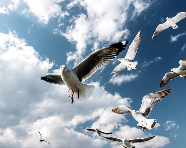 Photograph - Seagulls In Flight At Inle Lake by Martin Puddy