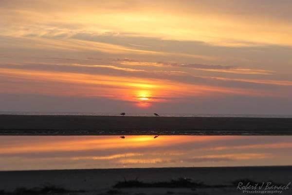 Photograph - Seagulls Meet At Sunrise by Robert Banach