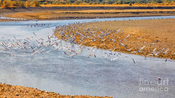 Wall Art - Photograph - Seagulls On Buzau Riverbank by Gabriela Insuratelu