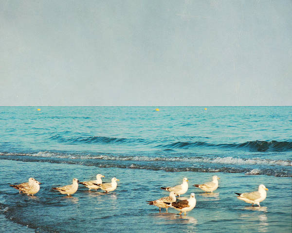 Wall Art - Photograph - Seagulls On The Beach by Violet Gray
