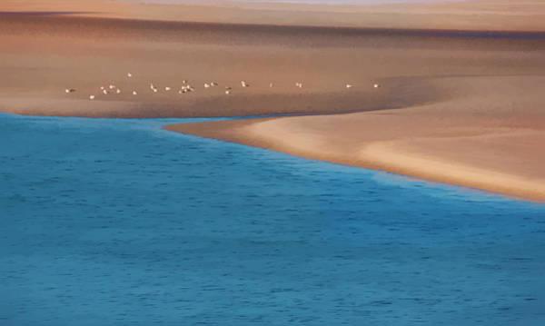 Photograph - Seagulls On The Beach Watercolor by Sandy Scharmer