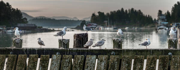 Tofino Wall Art - Photograph - Seagulls On Wharf At Marina, Tofino by Panoramic Images