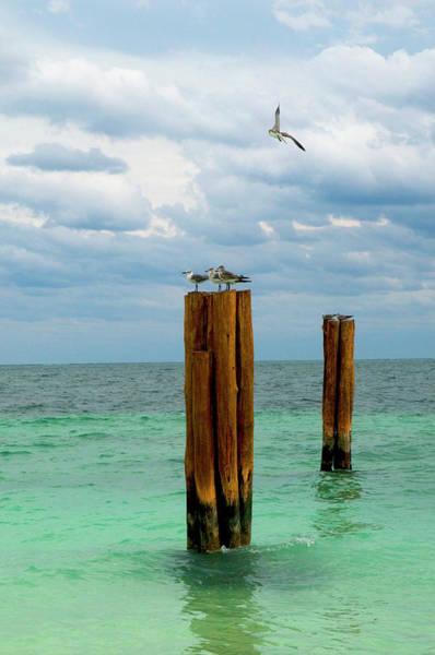 Quintana Roo Photograph - Seagulls On Wooden Pier Pylon Remains by Sabrina Dalbesio