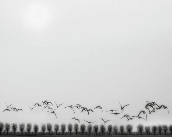 Colonnade Photograph - Seagulls Over The Fields by Yvette Depaepe