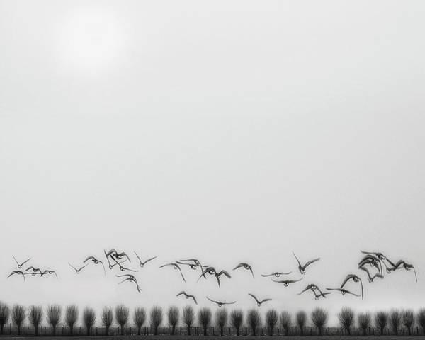 Seagulls Over The Fields Art Print