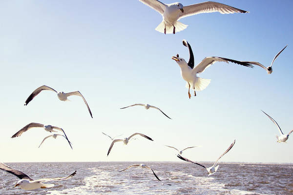 Taking Off Photograph - Seagulls Passing Above The Sea by Helaine Weide